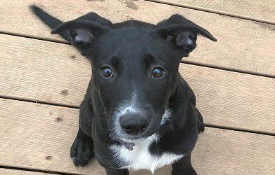 Meet Flynn