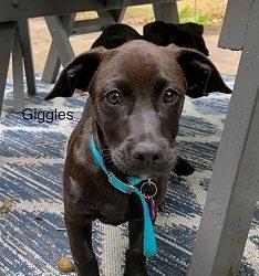 Meet Giggles