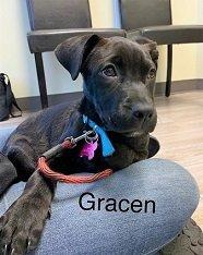 Meet Gracen