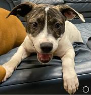 Meet Beatrix-adoption pending